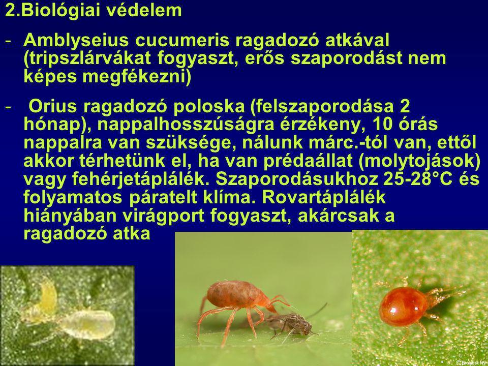 2.Biológiai védelem -Amblyseius cucumeris ragadozó atkával (tripszlárvákat fogyaszt, erős szaporodást nem képes megfékezni) - Orius ragadozó poloska (