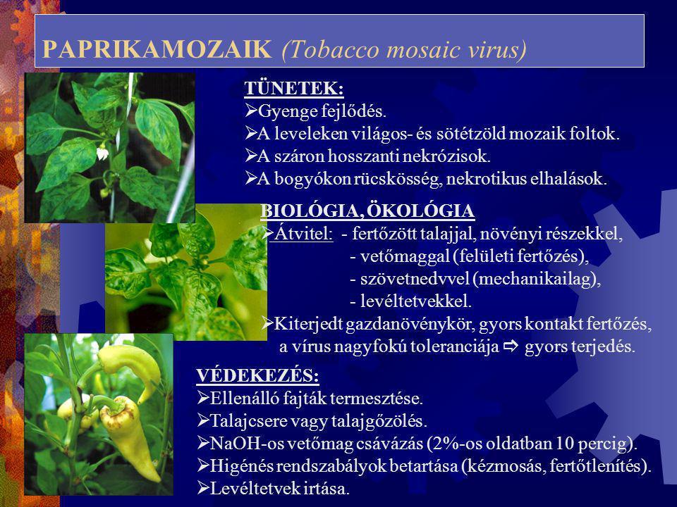 PAPRIKAMOZAIK (Tobacco mosaic virus) TÜNETEK:  Gyenge fejlődés.  A leveleken világos- és sötétzöld mozaik foltok.  A száron hosszanti nekrózisok. 