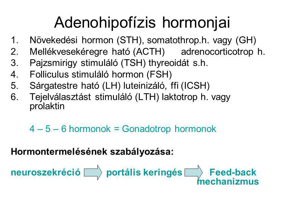 Adenohipofízis hormonjai 1.Növekedési hormon (STH), somatothrop.h. vagy (GH) 2.Mellékvesekéregre ható (ACTH) adrenocorticotrop h. 3.Pajzsmirigy stimul