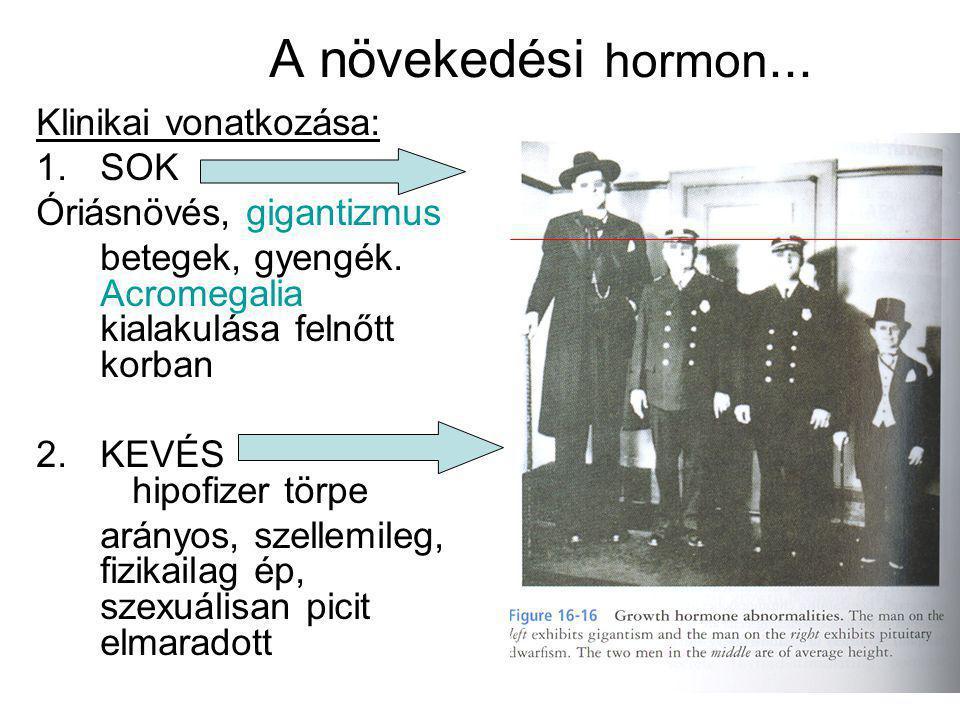 A növekedési hormon... Klinikai vonatkozása: 1.SOK Óriásnövés, gigantizmus betegek, gyengék. Acromegalia kialakulása felnőtt korban 2.KEVÉS hipofizer