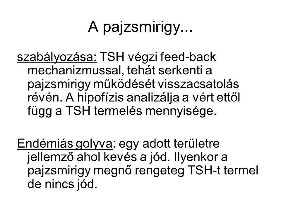 A pajzsmirigy... szabályozása: TSH végzi feed-back mechanizmussal, tehát serkenti a pajzsmirigy működését visszacsatolás révén. A hipofízis analizálja