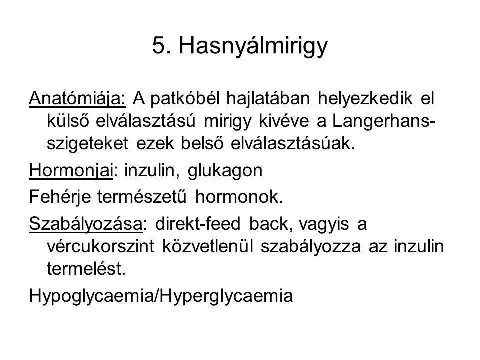 5. Hasnyálmirigy Anatómiája: A patkóbél hajlatában helyezkedik el külső elválasztású mirigy kivéve a Langerhans- szigeteket ezek belső elválasztásúak.