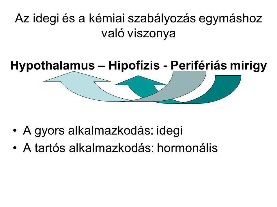 Az idegi és a kémiai szabályozás egymáshoz való viszonya Hypothalamus – Hipofízis - Perifériás mirigy A gyors alkalmazkodás: idegi A tartós alkalmazko