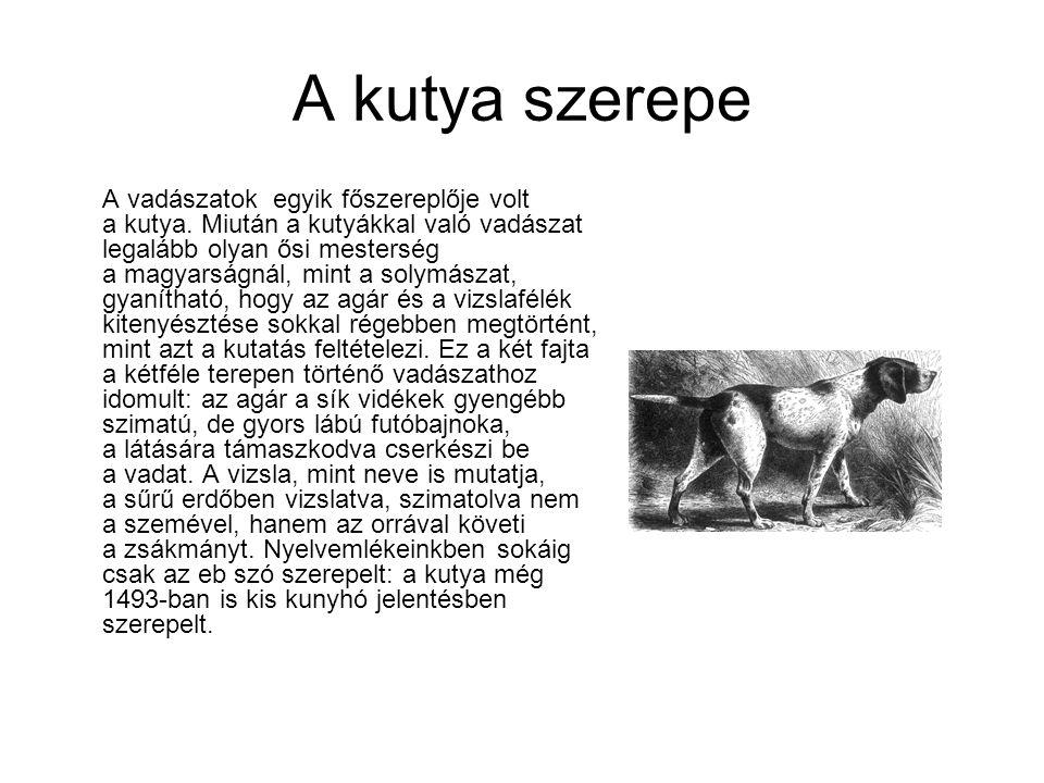 A kutya szerepe A vadászatok egyik főszereplője volt a kutya. Miután a kutyákkal való vadászat legalább olyan ősi mesterség a magyarságnál, mint a sol