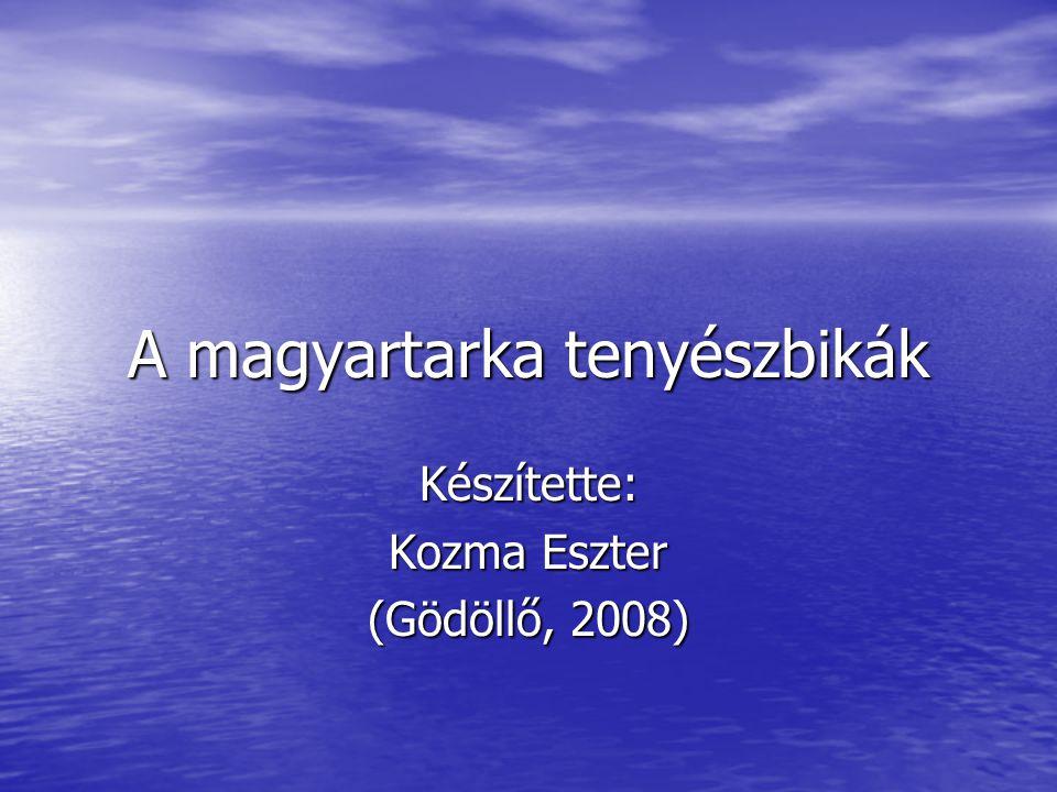 A magyartarka tenyészbikák Készítette: Kozma Eszter (Gödöllő, 2008)