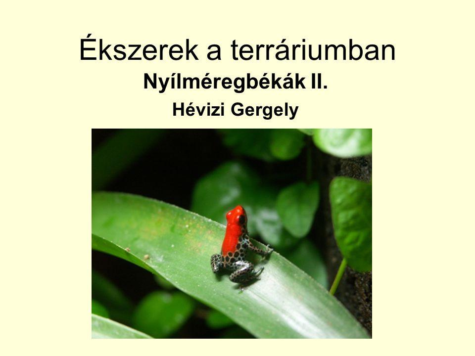 Ékszerek a terráriumban Nyílméregbékák II. Hévizi Gergely