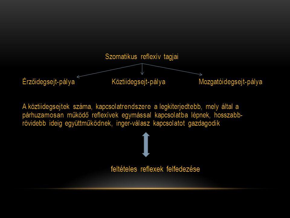 Szomatikus reflexív tagjai Érzőidegsejt-pálya Köztiidegsejt-pálya Mozgatóidegsejt-pálya A köztiidegsejtek száma, kapcsolatrendszere a legkiterjedtebb,