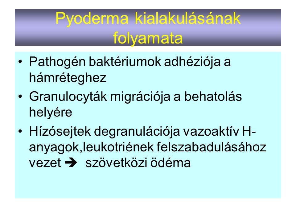 Pyoderma kialakulásának folyamata Pathogén baktériumok adhéziója a hámréteghez Granulocyták migrációja a behatolás helyére Hízósejtek degranulációja v
