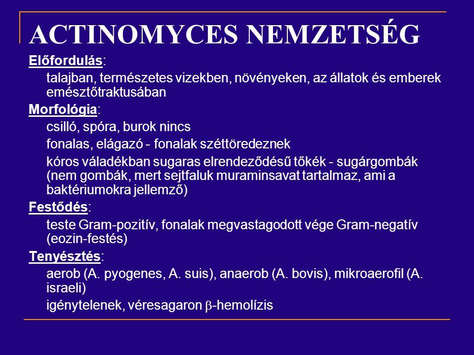 ACTINOMYCES NEMZETSÉG Biokémia: Fermentatív CH-át bontás, kataláz- Voges-Proskauer+ H 2 S-termelés tioszulfátokból Ellenállóképesség: Közepes, a kiszáradást jól tolerálják Patogenitás: fakultatív patogén: megbetegedést csak akkor okoznak, ha nyálkahártya sérülésen át mélyebb szövetekbe hatolnak.