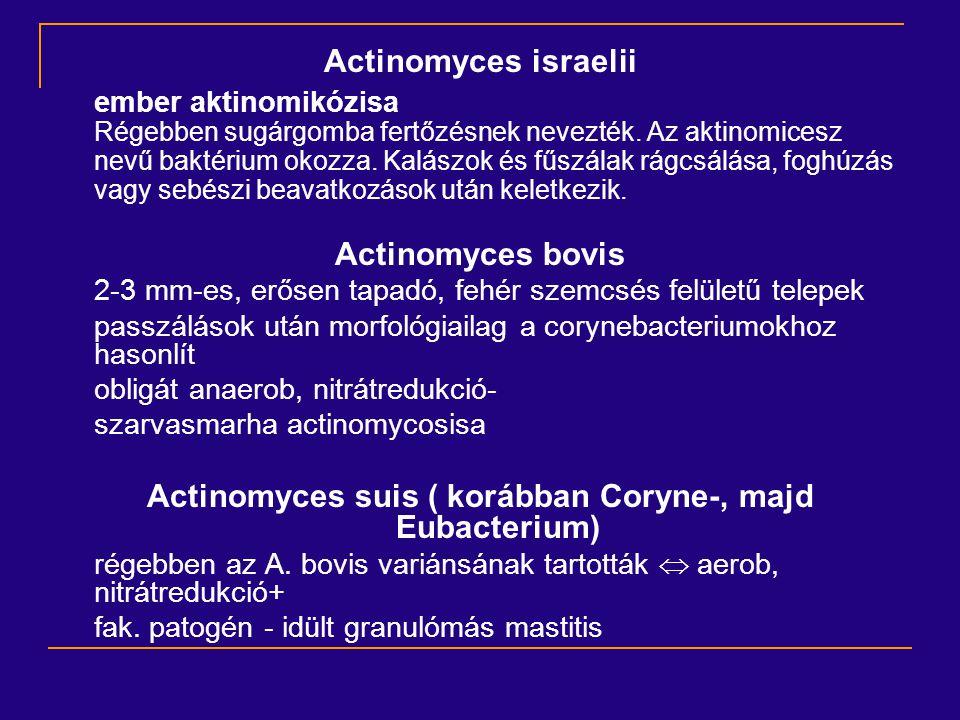 Actinomyces israelii ember aktinomikózisa Régebben sugárgomba fertőzésnek nevezték. Az aktinomicesz nevű baktérium okozza. Kalászok és fűszálak rágcsá