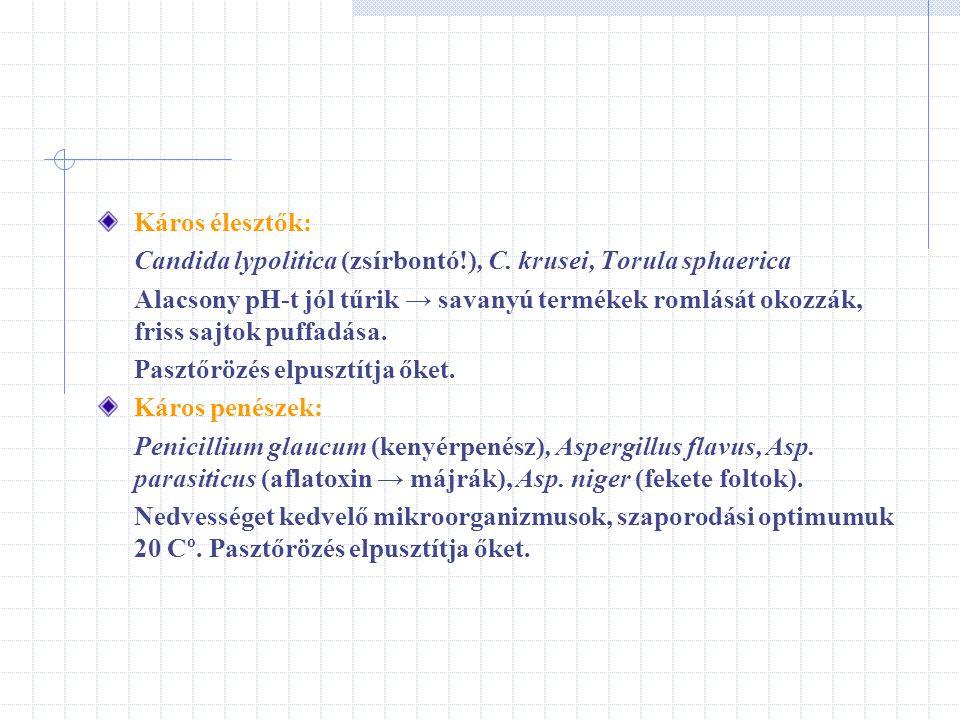 Káros élesztők: Candida lypolitica (zsírbontó!), C. krusei, Torula sphaerica Alacsony pH-t jól tűrik → savanyú termékek romlását okozzák, friss sajtok