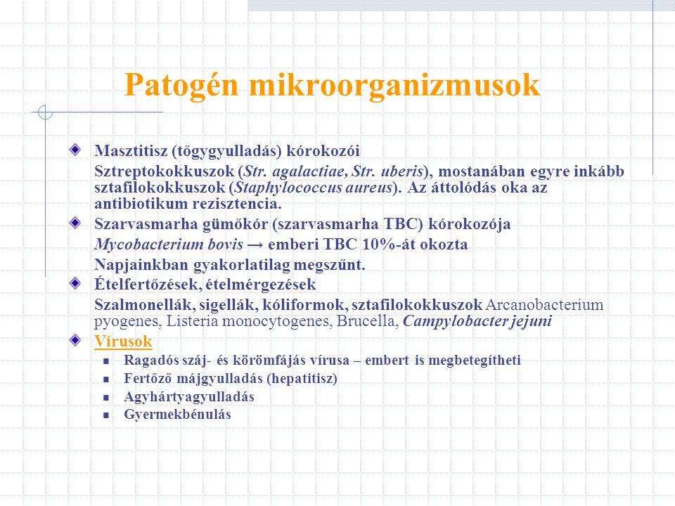 Patogén mikroorganizmusok Masztitisz (tőgygyulladás) kórokozói Sztreptokokkuszok (Str. agalactiae, Str. uberis), mostanában egyre inkább sztafilokokku