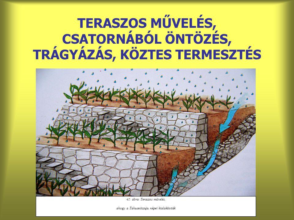 TERASZOS MŰVELÉS, CSATORNÁBÓL ÖNTÖZÉS, TRÁGYÁZÁS, KÖZTES TERMESZTÉS 40. á bra : Teraszos művelés, ahogy a Tahuantiszuju népei kialakított á k