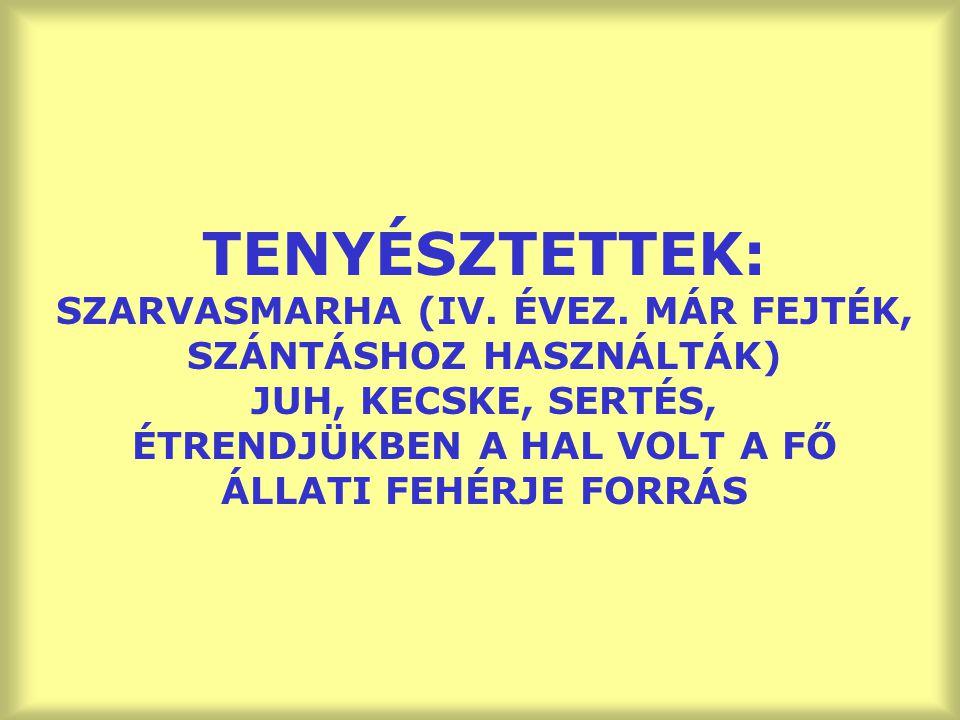 TENYÉSZTETTEK: SZARVASMARHA (IV. ÉVEZ. MÁR FEJTÉK, SZÁNTÁSHOZ HASZNÁLTÁK) JUH, KECSKE, SERTÉS, ÉTRENDJÜKBEN A HAL VOLT A FŐ ÁLLATI FEHÉRJE FORRÁS
