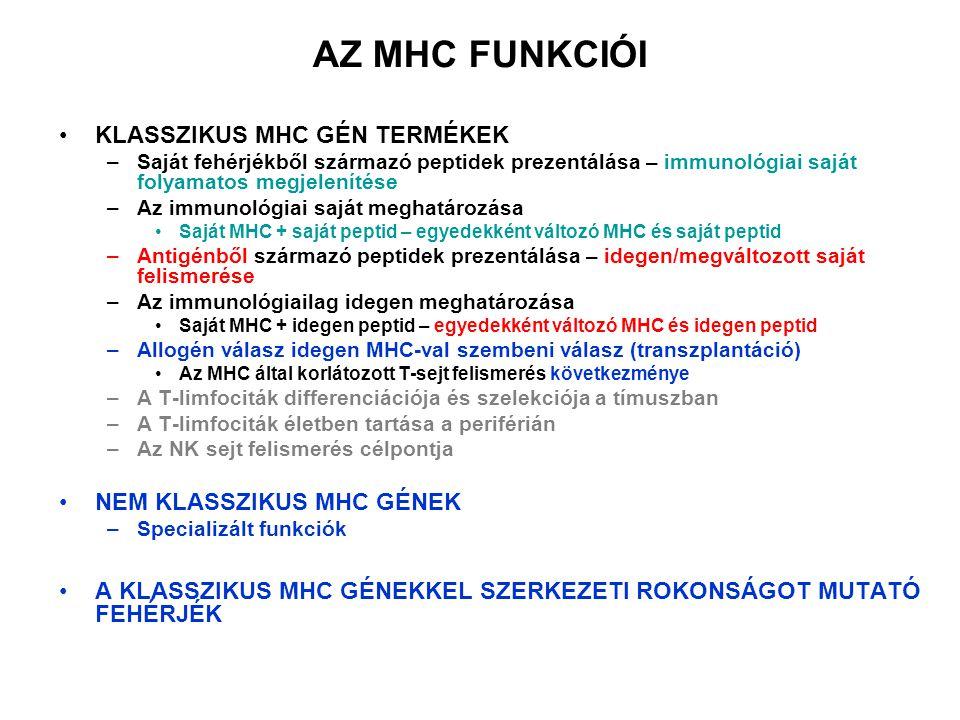 AZ MHC FUNKCIÓI KLASSZIKUS MHC GÉN TERMÉKEK –Saját fehérjékből származó peptidek prezentálása – immunológiai saját folyamatos megjelenítése –Az immunológiai saját meghatározása Saját MHC + saját peptid – egyedekként változó MHC és saját peptid –Antigénből származó peptidek prezentálása – idegen/megváltozott saját felismerése –Az immunológiailag idegen meghatározása Saját MHC + idegen peptid – egyedekként változó MHC és idegen peptid –Allogén válasz idegen MHC-val szembeni válasz (transzplantáció) Az MHC által korlátozott T-sejt felismerés következménye –A T-limfociták differenciációja és szelekciója a tímuszban –A T-limfociták életben tartása a periférián –Az NK sejt felismerés célpontja NEM KLASSZIKUS MHC GÉNEK –Specializált funkciók A KLASSZIKUS MHC GÉNEKKEL SZERKEZETI ROKONSÁGOT MUTATÓ FEHÉRJÉK