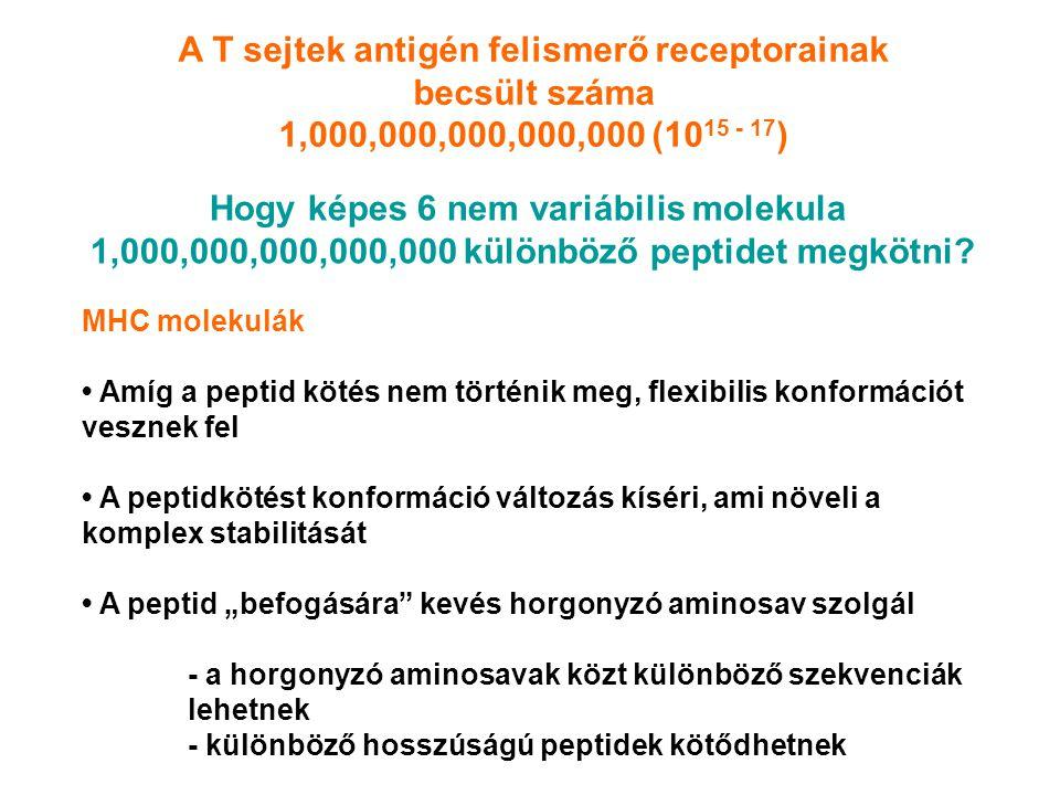 Hogy képes 6 nem variábilis molekula 1,000,000,000,000,000 különböző peptidet megkötni.