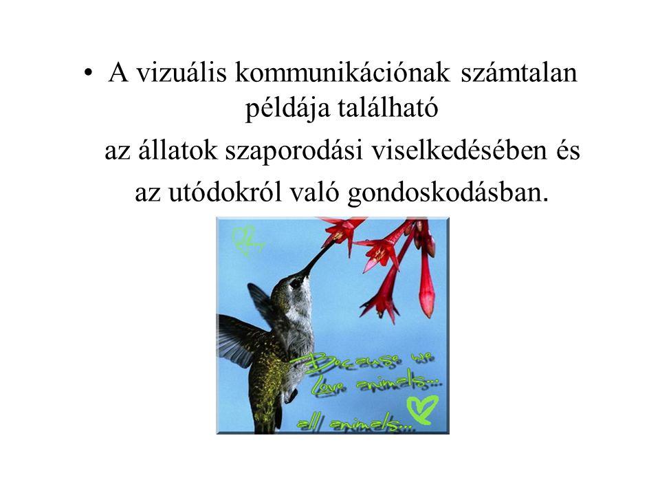 A vizuális kommunikációnak számtalan példája található az állatok szaporodási viselkedésében és az utódokról való gondoskodásban.