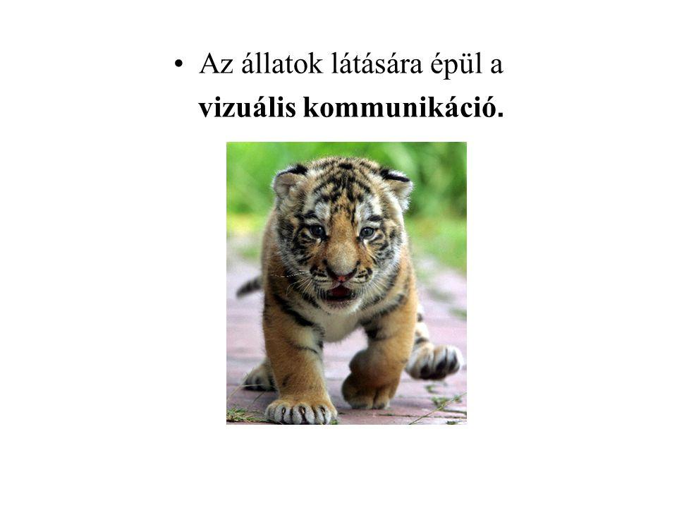 Az állatok látására épül a vizuális kommunikáció.