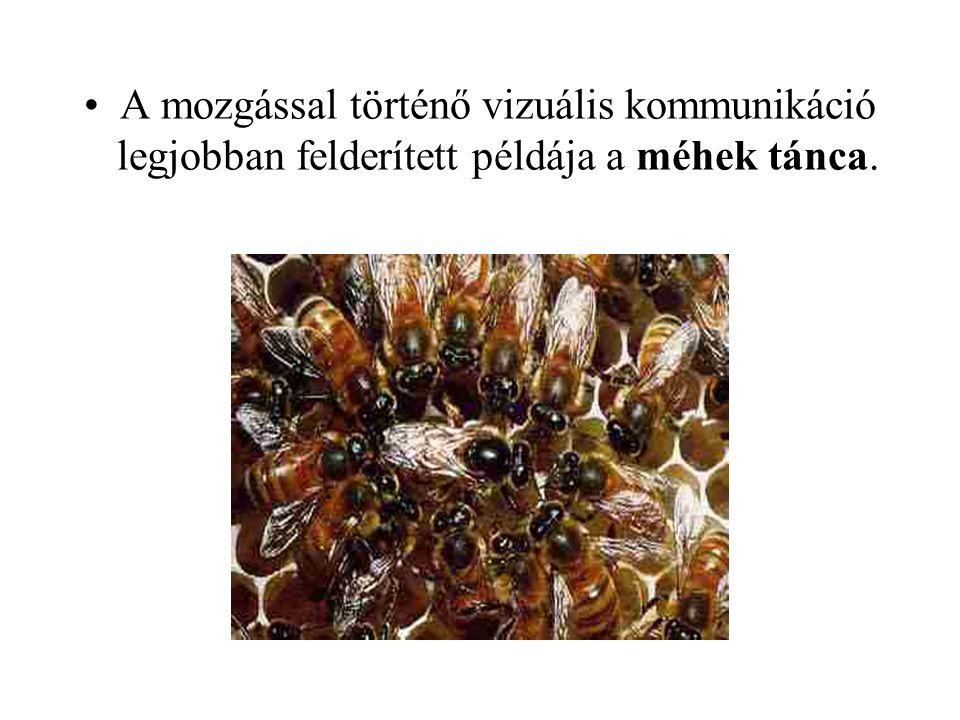 A mozgással történő vizuális kommunikáció legjobban felderített példája a méhek tánca.