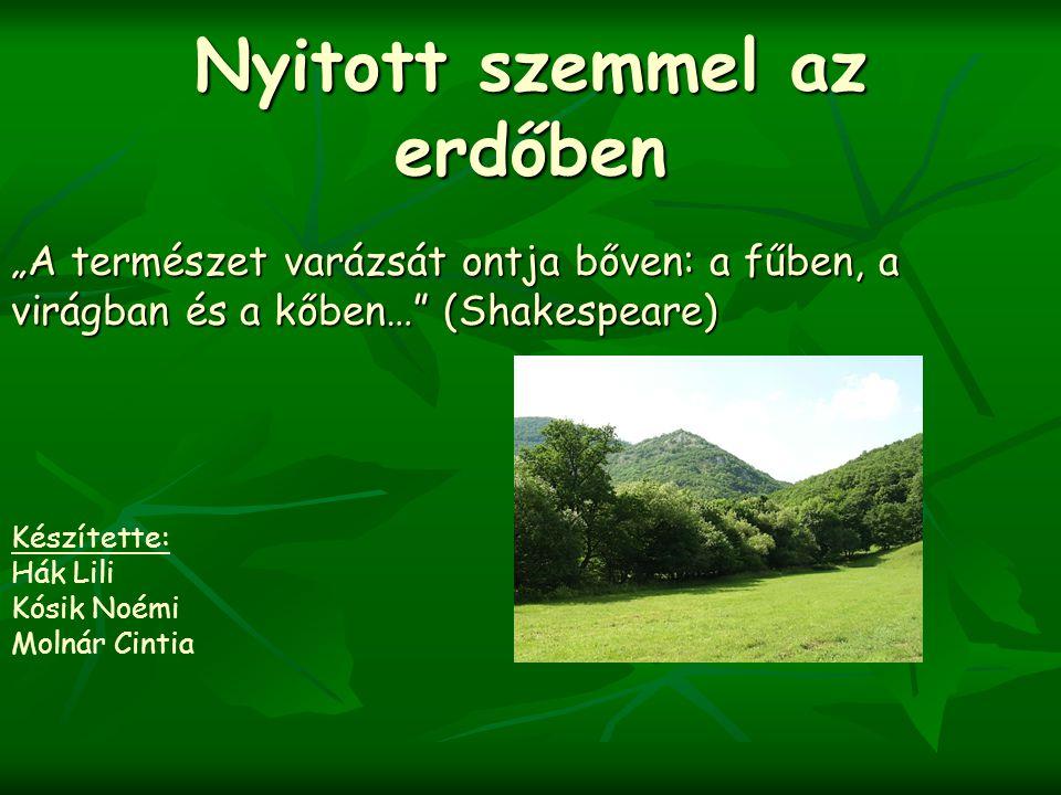 """Nyitott szemmel az erdőben """"A természet varázsát ontja bőven: a fűben, a virágban és a kőben…"""" (Shakespeare) Készítette: Hák Lili Kósik Noémi Molnár C"""