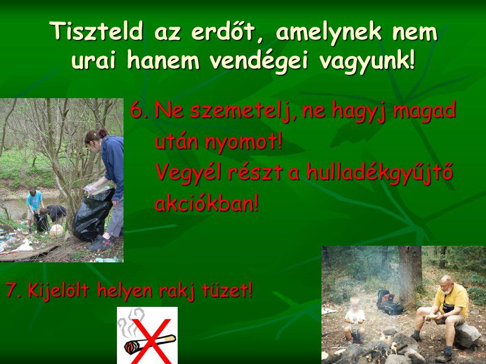 Tiszteld az erdőt, amelynek nem urai hanem vendégei vagyunk! 6. Ne szemetelj, ne hagyj magad 6. Ne szemetelj, ne hagyj magad után nyomot! után nyomot!