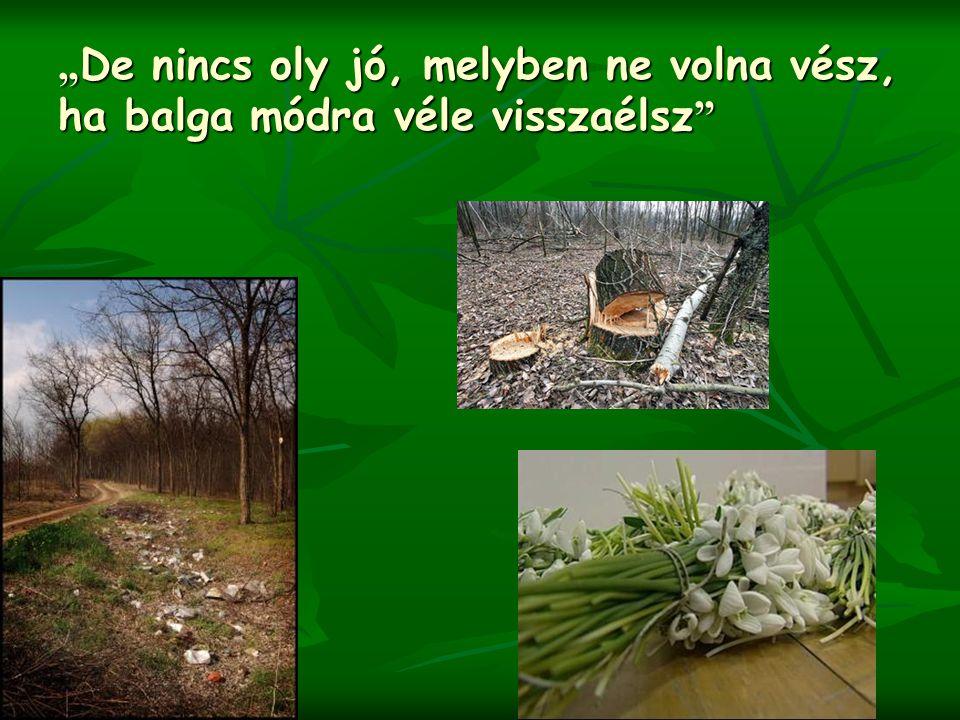 Tisztelt az erdőt, amelynek nem urai hanem vendégei vagyunk.
