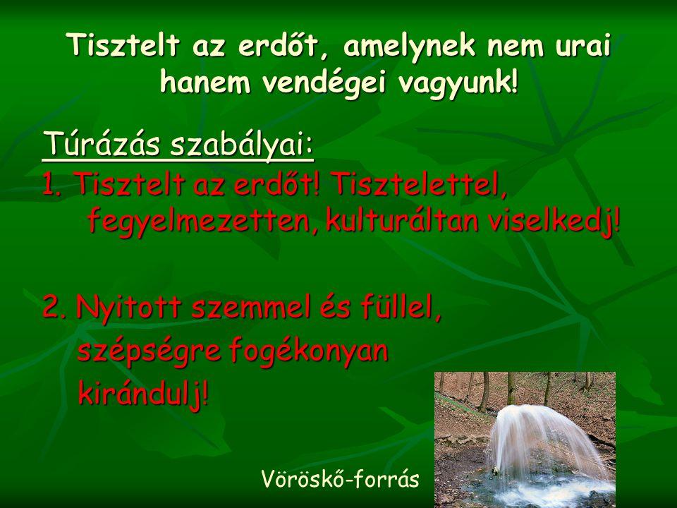 Tisztelt az erdőt, amelynek nem urai hanem vendégei vagyunk! 1. Tisztelt az erdőt! Tisztelettel, fegyelmezetten, kulturáltan viselkedj! 2. Nyitott sze