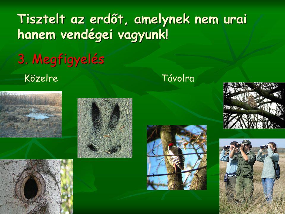 Tisztelt az erdőt, amelynek nem urai hanem vendégei vagyunk! 3. Megfigyelés KözelreTávolra