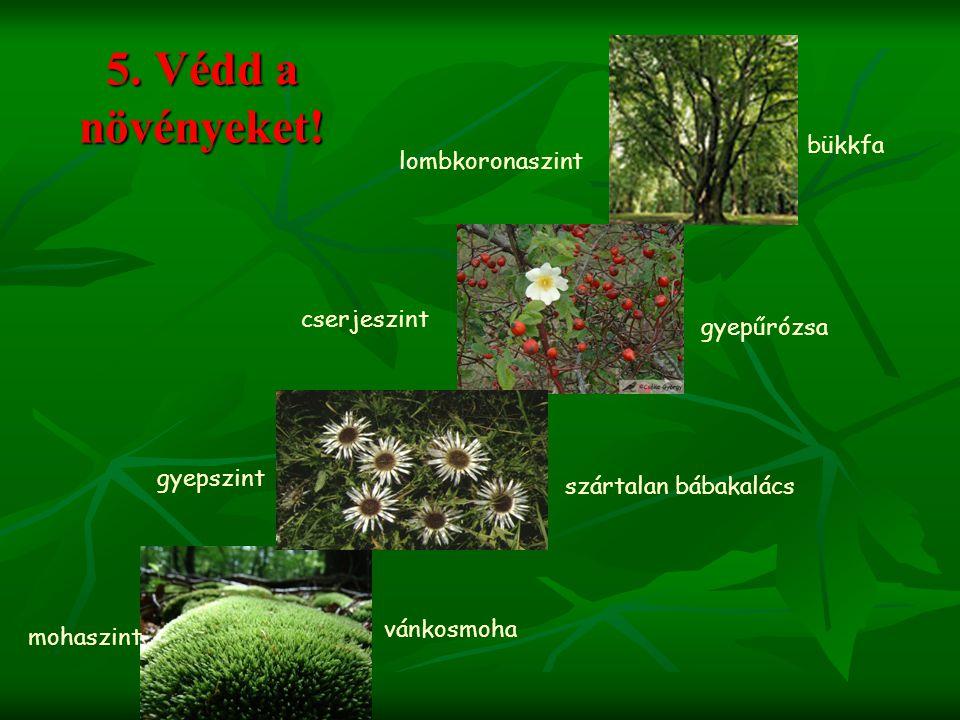 5. Védd a növényeket! vánkosmoha szártalan bábakalács gyepűrózsa bükkfa mohaszint gyepszint cserjeszint lombkoronaszint