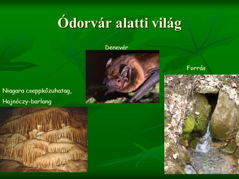 Ódorvár alatti világ Niagara cseppkőzuhatag, Hajnóczy-barlang Forrás Denevér