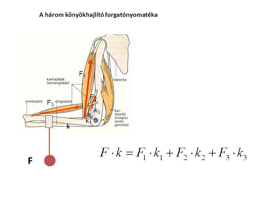A statikus (izometriás erő) mérése F k M = F k BrachioradialisBrachialisBiceps brachii