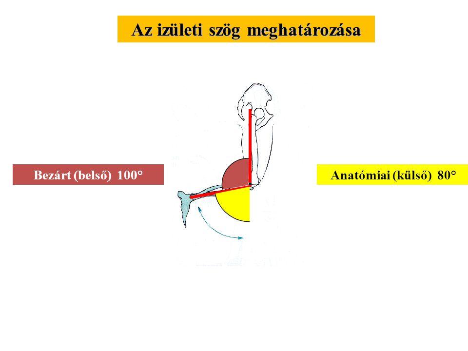 KARDINÁLIS SÍKOK FRONTÁLIS Közelítés - távolítás OLDAL feszítés - hajlítás TRANSZVERZÁLIS Anteroposterior v. mélységi Lateromedial v. szélességi Hossz