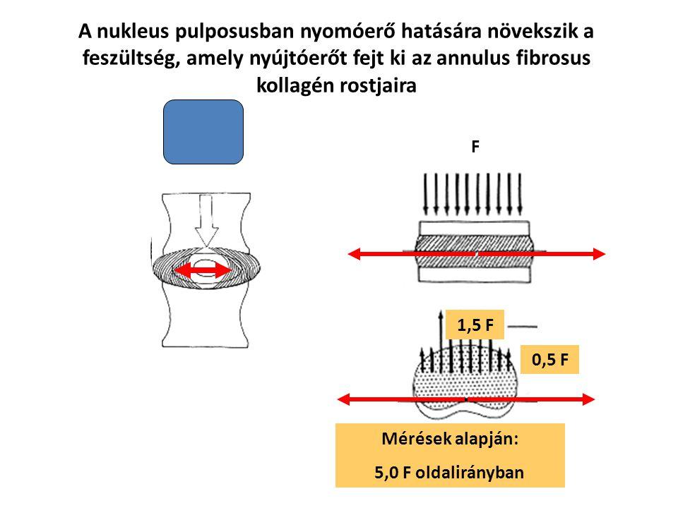 Transzláció Rotáció OldalirányúFelfelé és lefelé Előre és hátra LaterálisFüggőleges tengely körül Előre-hátra