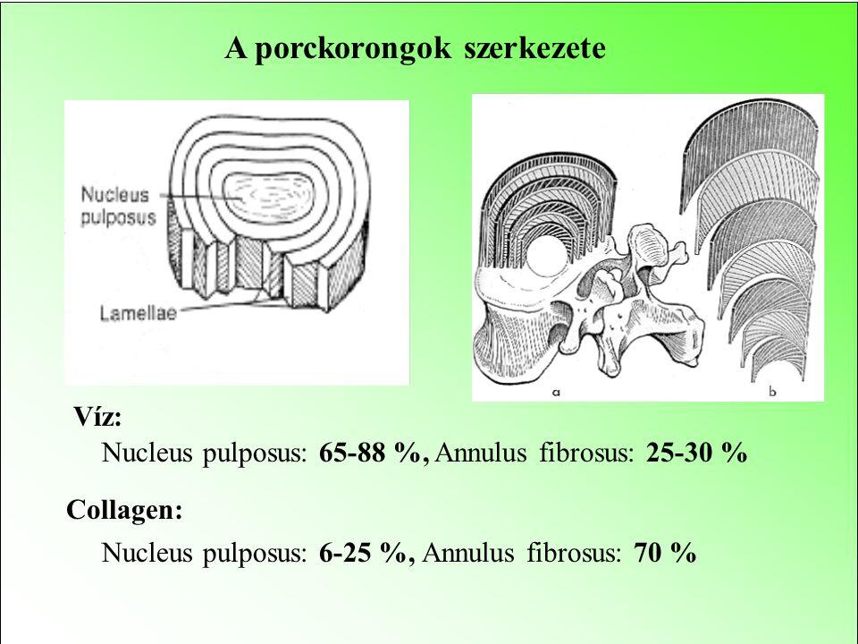 Nyomóerő az ágyéki szakaszra (L5-S1) Egyenes állás: 100 % Fekvés nyújtott testtel: 25 % Ülés egyenes háttal: 140 % Állás törzsdöntéssel: 150 % Ülés tö