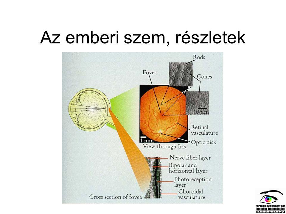 Az emberi szem, részletek