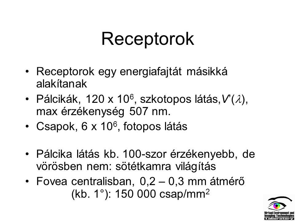 Receptorok Receptorok egy energiafajtát másikká alakítanak Pálcikák, 120 x 10 6, szkotopos látás,V'( ), max érzékenység 507 nm. Csapok, 6 x 10 6, foto