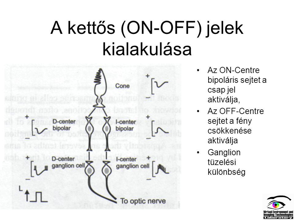 A kettős (ON-OFF) jelek kialakulása Az ON-Centre bipoláris sejtet a csap jel aktiválja, Az OFF-Centre sejtet a fény csökkenése aktiválja Ganglion tüze