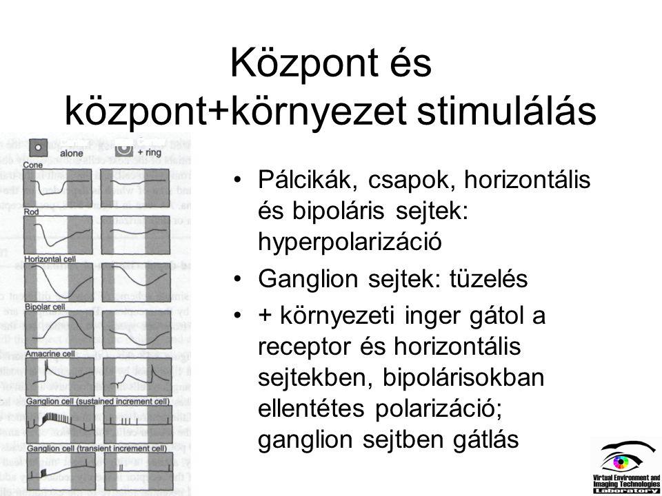 Központ és központ+környezet stimulálás Pálcikák, csapok, horizontális és bipoláris sejtek: hyperpolarizáció Ganglion sejtek: tüzelés + környezeti ing