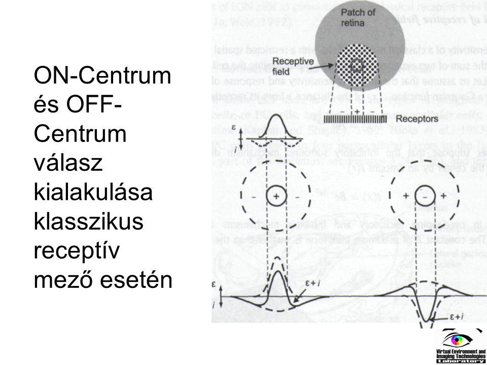 ON-Centrum és OFF- Centrum válasz kialakulása klasszikus receptív mező esetén