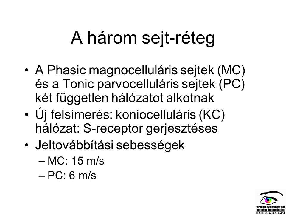 A három sejt-réteg A Phasic magnocelluláris sejtek (MC) és a Tonic parvocelluláris sejtek (PC) két független hálózatot alkotnak Új felsimerés: konioce