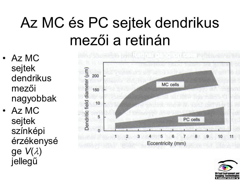Az MC és PC sejtek dendrikus mezői a retinán Az MC sejtek dendrikus mezői nagyobbak Az MC sejtek színképi érzékenysé ge V( ) jellegű
