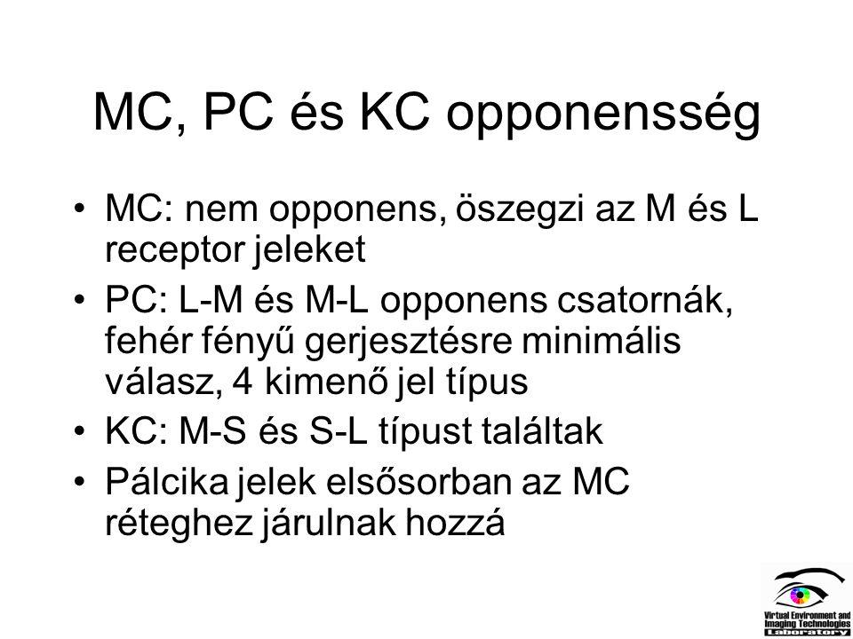 MC, PC és KC opponensség MC: nem opponens, öszegzi az M és L receptor jeleket PC: L-M és M-L opponens csatornák, fehér fényű gerjesztésre minimális vá