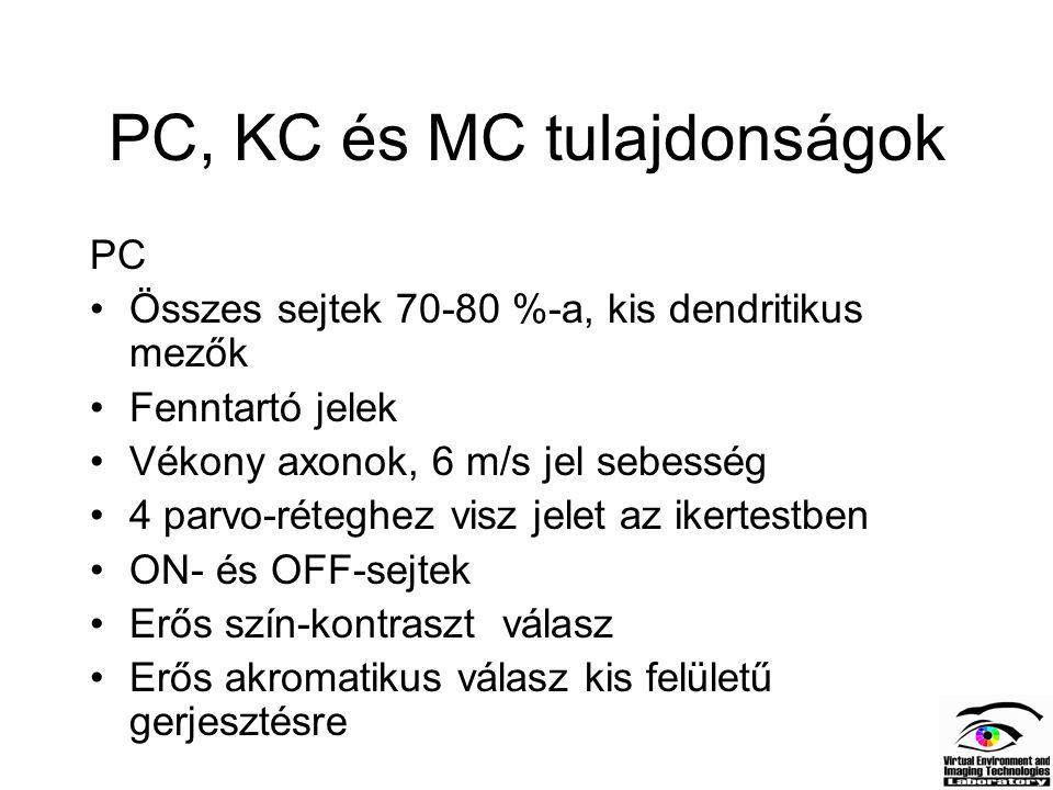 PC, KC és MC tulajdonságok PC Összes sejtek 70-80 %-a, kis dendritikus mezők Fenntartó jelek Vékony axonok, 6 m/s jel sebesség 4 parvo-réteghez visz j