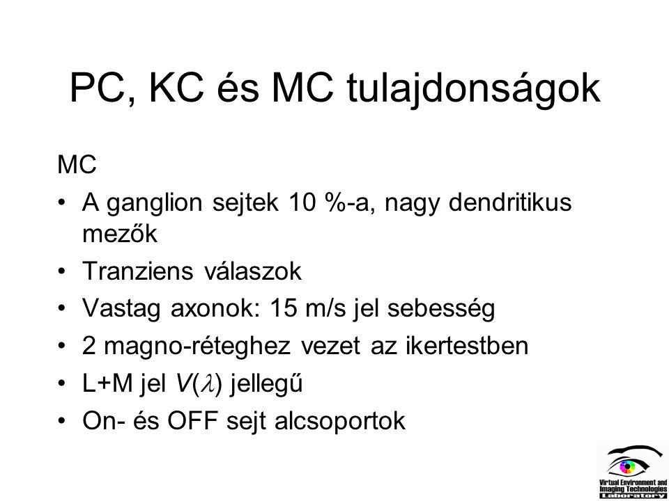 PC, KC és MC tulajdonságok MC A ganglion sejtek 10 %-a, nagy dendritikus mezők Tranziens válaszok Vastag axonok: 15 m/s jel sebesség 2 magno-réteghez