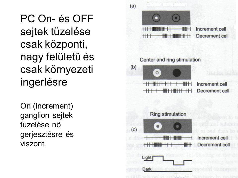 PC On- és OFF sejtek tüzelése csak központi, nagy felületű és csak környezeti ingerlésre On (increment) ganglion sejtek tüzelése nő gerjesztésre és vi