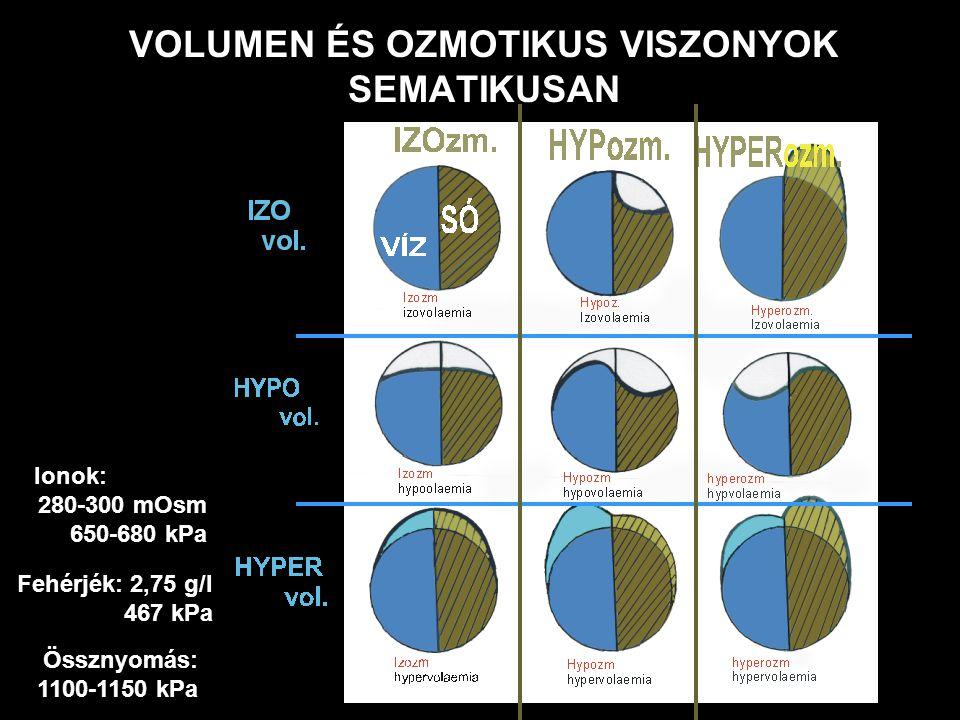 VOLUMEN ÉS OZMOTIKUS VISZONYOK SEMATIKUSAN Ionok: 280-300 mOsm 650-680 kPa Fehérjék: 2,75 g/l 467 kPa Össznyomás: 1100-1150 kPa