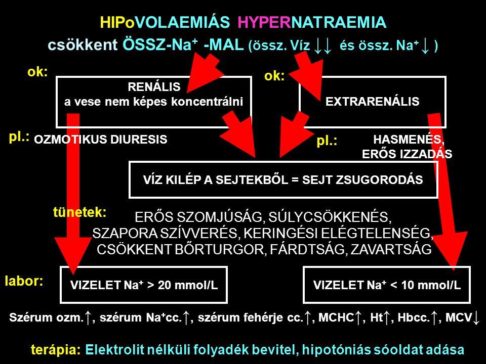 HIPoVOLAEMIÁS HYPERNATRAEMIA csökkent ÖSSZ-Na + -MAL (össz. Víz ↓↓ és össz. Na + ↓ ) ok: RENÁLIS a vese nem képes koncentrálniEXTRARENÁLIS pl.: OZMOTI