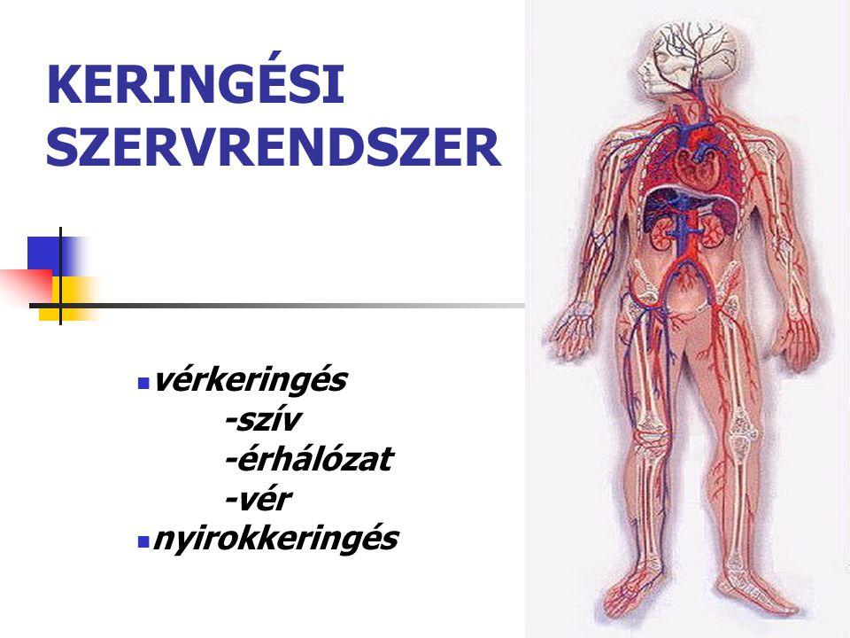 12 piros - oxigéndús vér kék - oxigénszegény vér