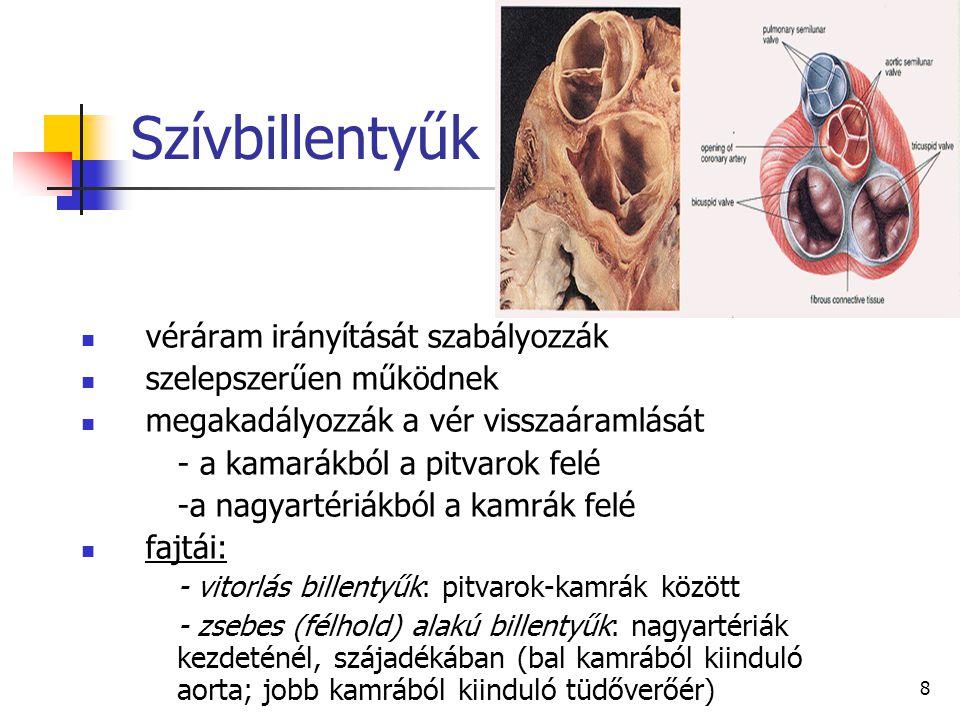 8 Szívbillentyűk véráram irányítását szabályozzák szelepszerűen működnek megakadályozzák a vér visszaáramlását - a kamarákból a pitvarok felé -a nagya