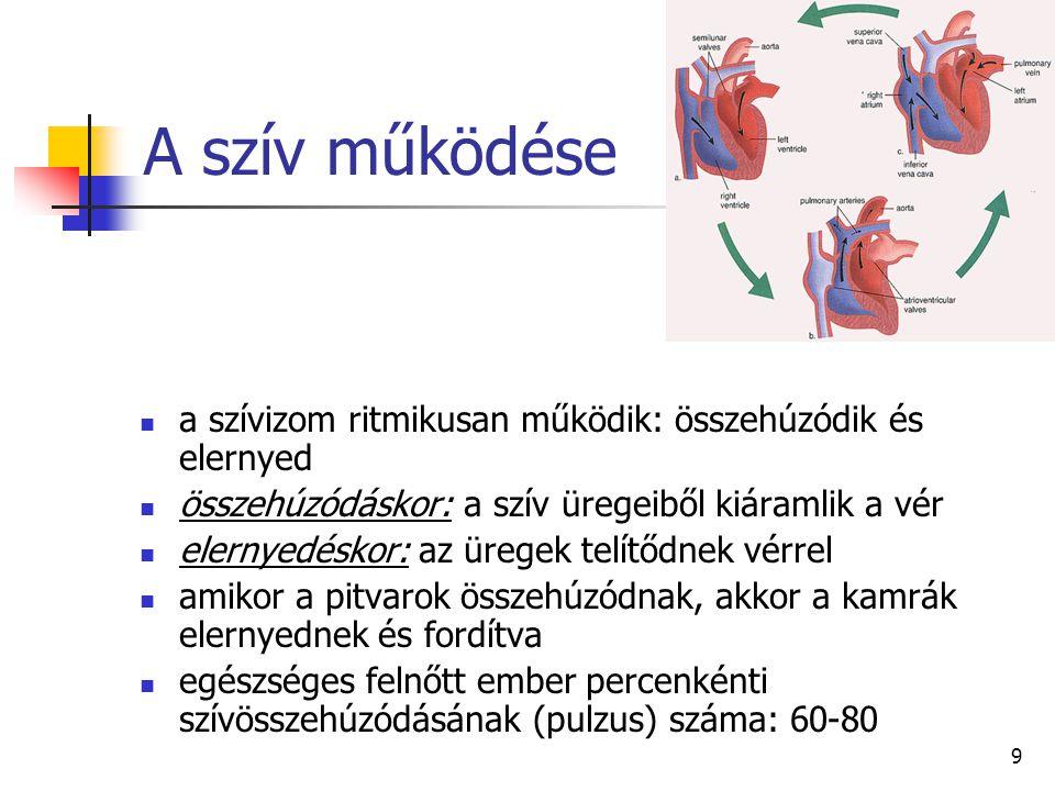 9 A szív működése a szívizom ritmikusan működik: összehúzódik és elernyed összehúzódáskor: a szív üregeiből kiáramlik a vér elernyedéskor: az üregek t
